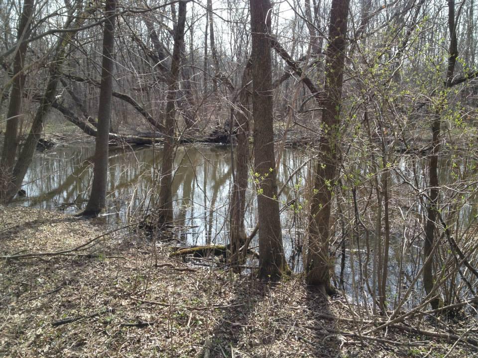 Temporary spring pond